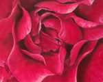 Roses- and Yoni- paintings since 2000